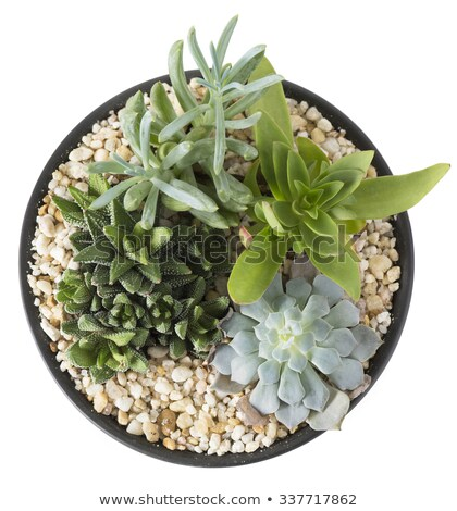 工場 庭園 表示 ジューシーな 植物 ストックフォト © icemanj