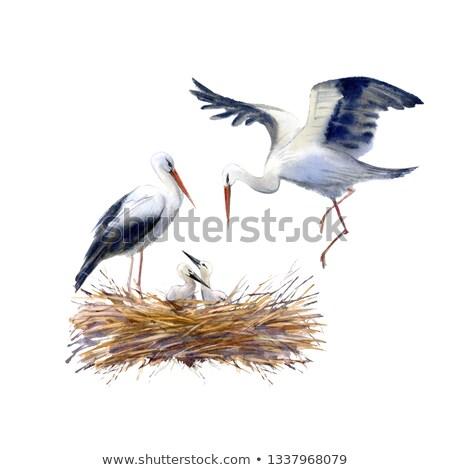 Cegonha bebê telhado ilustração pássaro azul Foto stock © adrenalina