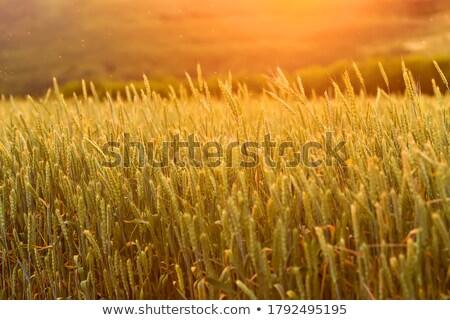 Orange bread. Stock photo © Fisher