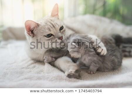 Gatito blanco bebé feliz ojos Foto stock © dnsphotography