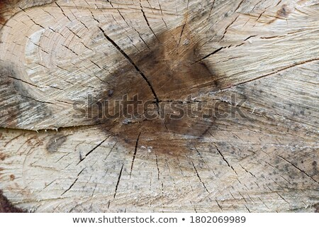 Round striped surface of birch trunk Stock photo © Mps197