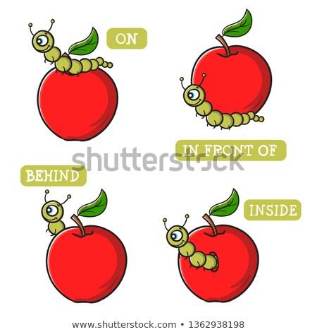 Apfel · Wurm · unterhalb · Illustration · Regenwurm · Bedeutung - stock foto © lenm