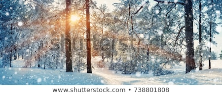 Snowy Christmas landscape with snowfall  Stock photo © Kotenko