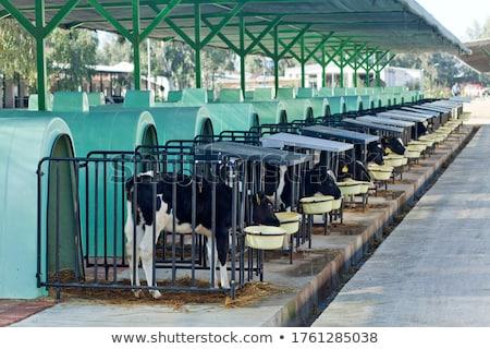 csőr · csoport · farm · állat · címke · szalmaszál - stock fotó © monkey_business