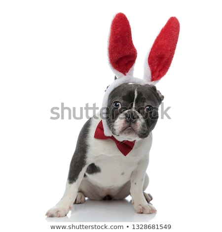 french bulldog wearing a red bowtie and red rabbit ears Stock photo © feedough