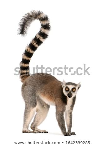 illusztráció · természet · háttér · fekete · majom · rajz - stock fotó © colematt