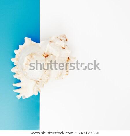 Minimal style. Flat lay. A minimalistic fashion photo. Pop Art. A colorful simple photograph of sea  Stock photo © serdechny
