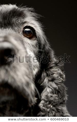 тесные выстрел английский носа изолированный Сток-фото © vauvau
