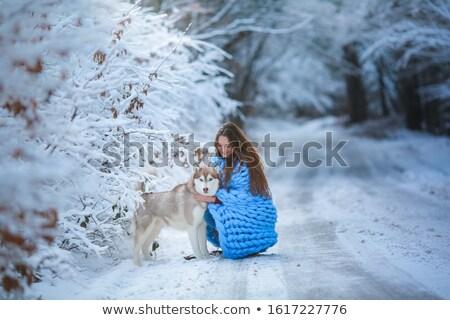 Młoda kobieta husky psa drogowego kobiet piękna Zdjęcia stock © ElenaBatkova
