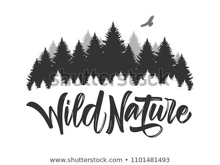 Wandelen wild natuur jonge vrouw sport opleiding Stockfoto © val_th