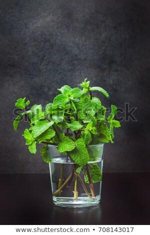 Szkła mojito lata koktajl mięty Zdjęcia stock © DenisMArt