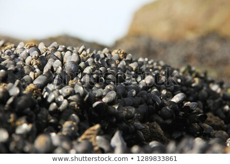 sea rocks and sticks for farmed mussels stock photo © photography33