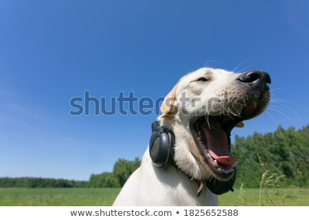 友達 音楽を聴く 青空 電話 髪 ビデオ ストックフォト © photography33