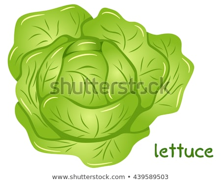 vert · laitue · salade · 10 · alimentaire · feuille - photo stock © TheProphet