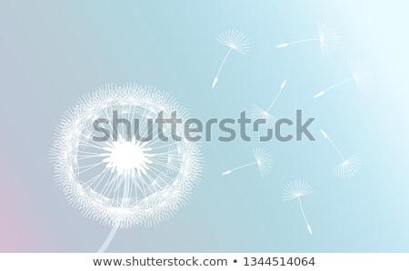 одуванчик ветер семени подвесной природы свет Сток-фото © Kuzeytac