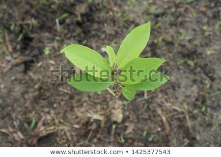Folha macieira jovem verde isolado Foto stock © boroda