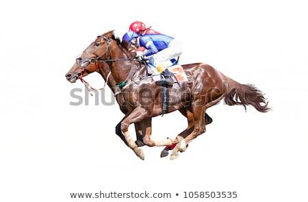 Two horses in harness Stock photo © marekusz