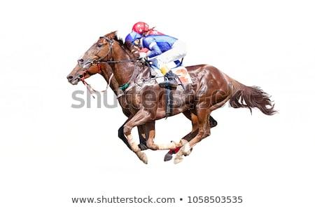 cavalos · cabeça · cavalo · fazenda · boca · animal - foto stock © marekusz