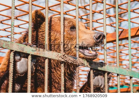 Captivité ours brun cage fermé zoo vie Photo stock © Mikko