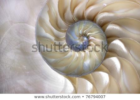sea shell close up isolated on white stock photo © taden