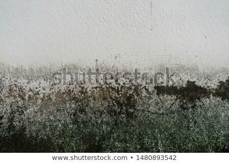Régi papír zöld klasszikus papír űr szöveg Stock fotó © scenery1