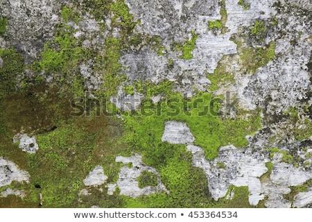yosun · taş · doku · yüzey · dizayn · arka · plan - stok fotoğraf © PavelKozlovsky