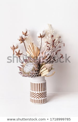 red protea flowers Stock photo © rabel