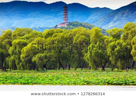Yue Feng Pagoda Lotus Garden Willow Trees Summer Palace Beijing, Stock photo © billperry