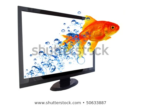 Foto stock: Peixe-dourado · saltar · fora · monitor · oceano · computador