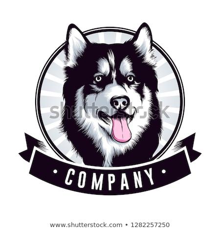 Siberian Wolf Stock photo © Koufax73