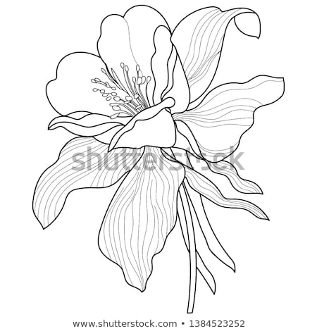 Anther and pistil of Aquilegia Blossom Stock photo © manfredxy