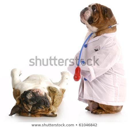 Dierenarts puppy controleren omhoog witte vrouw Stockfoto © wavebreak_media