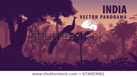Páva vidéki táj színes természet szépség madár Stock fotó © meinzahn