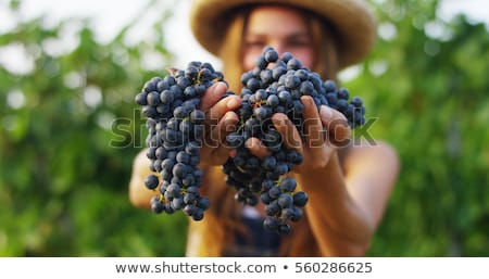 A girl and a grapevine Stock photo © bluering