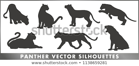 Panter silhouet zwarte geïsoleerd witte Stockfoto © sifis