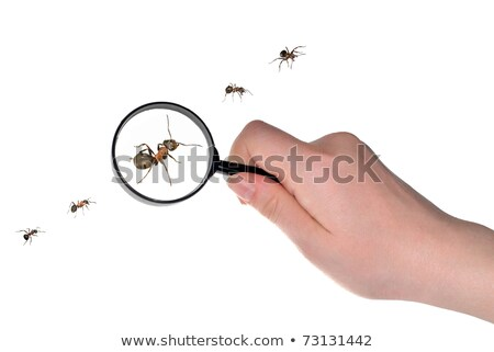 Ant Hand Magnifying Glass Stock photo © lenm