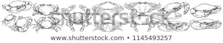 crab hand drawn sketch icon stock photo © rastudio
