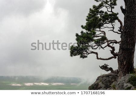 Groot boom klif illustratie hemel landschap Stockfoto © colematt