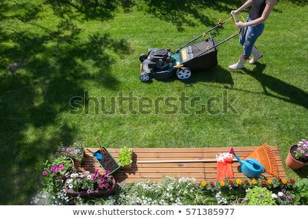ストックフォト: 新鮮な · 芝生 · 花 · 春 · 緑の草