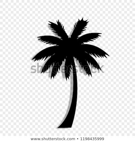 Hurma ağacı sanat klibi logo vektör ikon simge Stok fotoğraf © blaskorizov