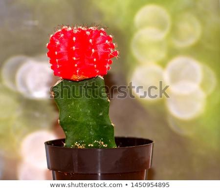 luna · cactus · mutante · macro · primo · piano · abstract - foto d'archivio © galitskaya