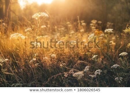 Mixto vegetación primer plano paisaje Foto stock © prill