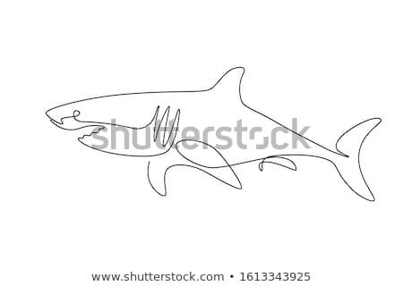 siyah · beyaz · mutlu · köpekbalığı · karikatür · maskot · karakter - stok fotoğraf © cidepix