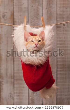 Kitten asking for a nice present - praying with joined paws, nes Stock photo © ilona75