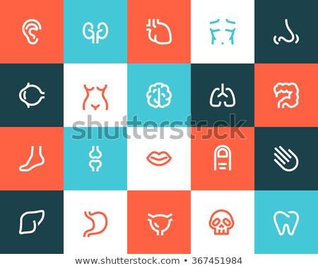 Foot anatomy icon. Stock photo © smoki