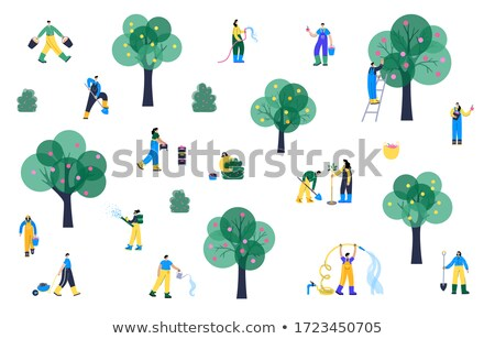 Man Collects Apples from Tree in Bucket Stock photo © robuart