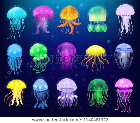 Wild Jelly Fish Floating In Ocean Stock photo © KonArt