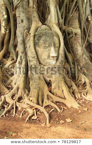 Cabeça arenito buda árvore pedra adorar Foto stock © Witthaya