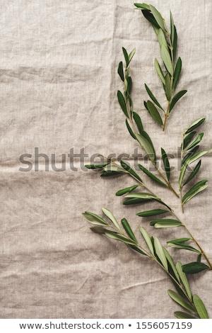 Olive fourche métal régime alimentaire macro photographie Photo stock © farres