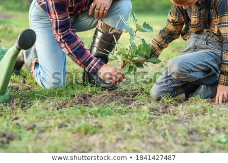 Little boy with a young oak tree Stock photo © photography33